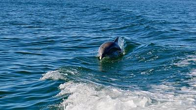 Photograph - Gulf Coast Of Mexico Dolphin by Kristina Deane