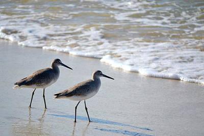 Rhoades Photograph - Gulf Coast Shorebirds by Mg Blackstock