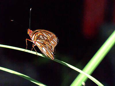Pop Art - Gulf Fritillary 012 by Chris Mercer