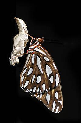 Photograph - Gulf Fritillary Butterfly And Chrysalis by Bradford Martin