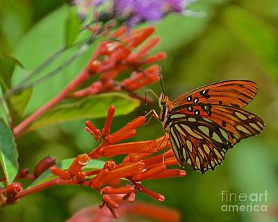 Photograph - Gulf Fritillary Butterfly by AnnaJo Vahle