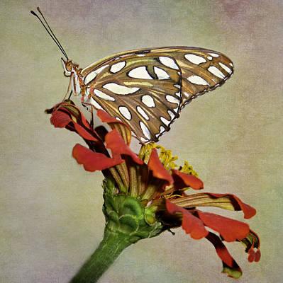Gulf Fritillary Photograph - Gulf Fritillary Butterfly by David and Carol Kelly