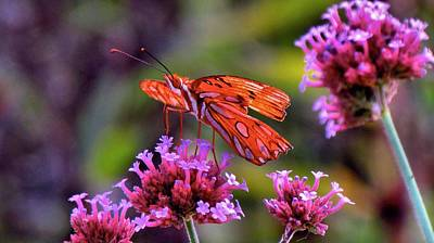 Photograph - Gulf Fritillary  by Carol Montoya