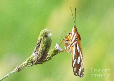 Photograph - Gulf Fritillary Side View by Audrey Van Tassell
