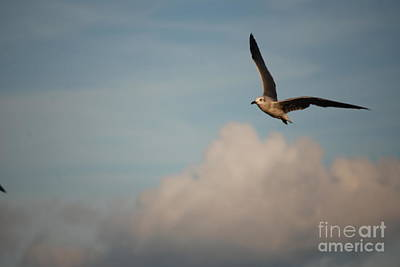 Photograph - Gull Against The Clouds by Mark McReynolds