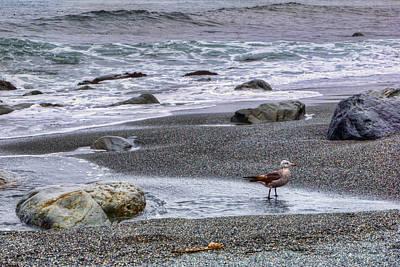 Gull And Black Sand Beach - California Art Print