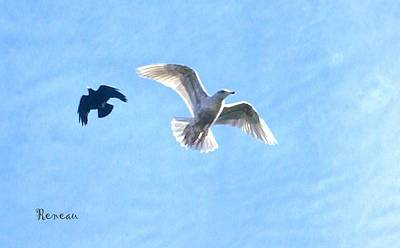 Photograph - Gull And Crow In Flight by Sadie Reneau
