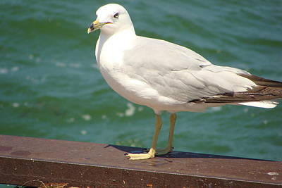 Photograph - Gull by Anthony Seeker