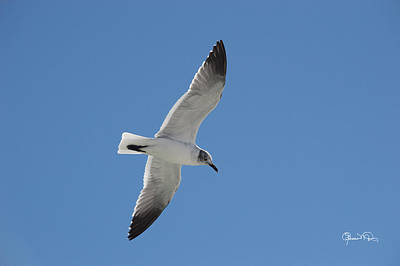 Photograph - Gull At Lido Beach I by Susan Molnar