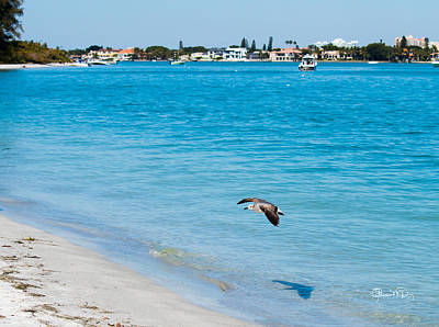 Photograph - Gull At Lido Beach II by Susan Molnar