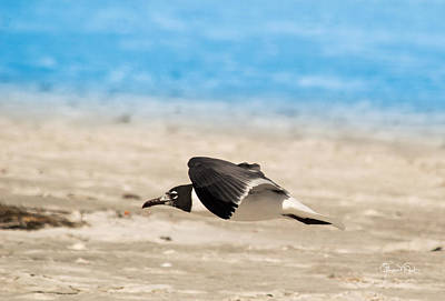 Photograph - Gull At Lido Beach Iv by Susan Molnar