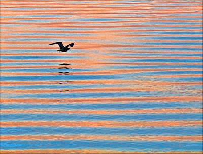 Photograph - Seagull At Sunrise On Penoboscot Bay by Ginger Wakem