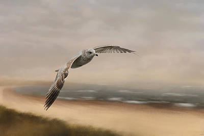 Flying Gull Photograph - Gull At The Shore by Jai Johnson