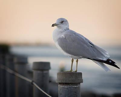 Photograph - Gull by Chris Bordeleau