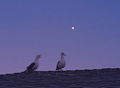 Photograph - Gull Couple In Moonlight by Robert Meyers-Lussier