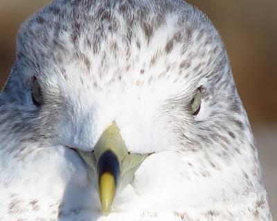 Photograph - Gull  by Donna Cavanaugh