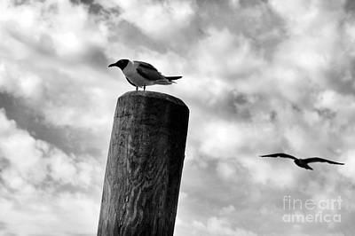 Photograph - Gull Drama Mono by John Rizzuto