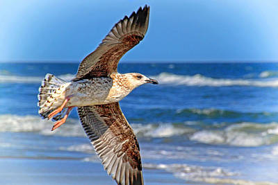 Photograph - Gull In Flight by Carolyn Derstine