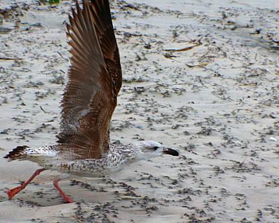 Photograph - Gull In Flight by Jon Emery