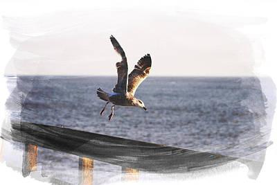 Gull In Flight Art Print by Martin Newman