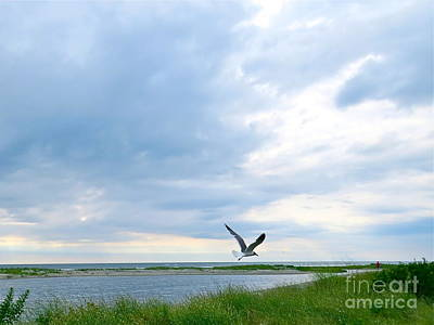 Photograph - Gull In Flight  by Nancy Patterson