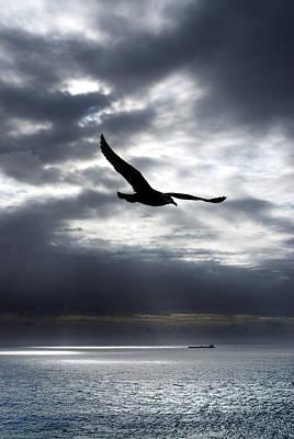 Ocean Photograph - Gull by Mark Rogan
