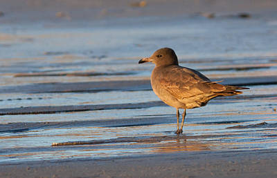 Photograph - Gull On The Beach by Melinda Fawver