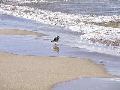 Gull On The Shore Print by Richard Gregurich