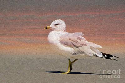 Photograph - Gull Onthe Beach by Kathy Baccari