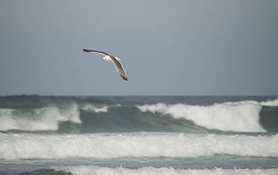 Photograph - Gull Over Breakers by Loree Johnson