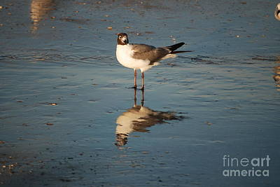 Photograph - Gull Reflection by Mark McReynolds