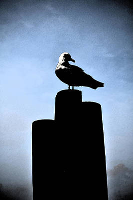 Digital Art - Gull Silhouette by Kathleen Stephens