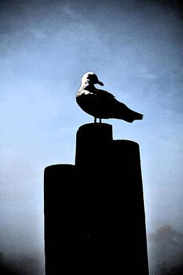 Digital Art - Gull Silhouette by Kathleen Stephens