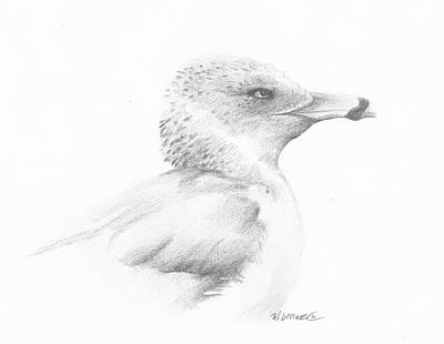 Drawing - Gull Study by Meagan  Visser