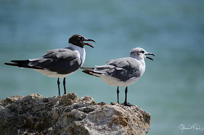 Photograph - Gull Talk by Susan Molnar