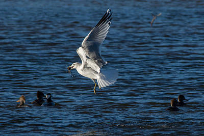 Black And White Flower Photography - Gull Thief by Richard Kitchen