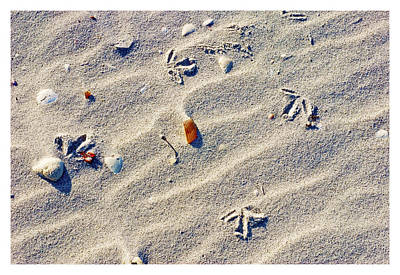 Gull Tracks Art Print