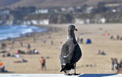 Gull Watching Beach Visitors Art Print
