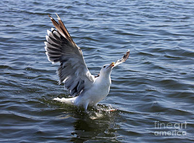 Photograph - Gull Wings I by Mary Haber