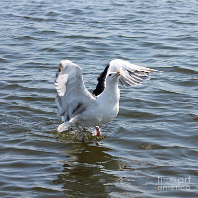 Photograph - Gull Wings II by Mary Haber