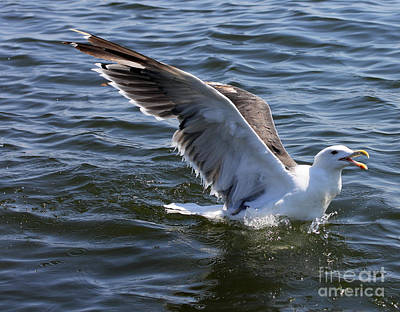 Photograph - Gull Wings IIi by Mary Haber