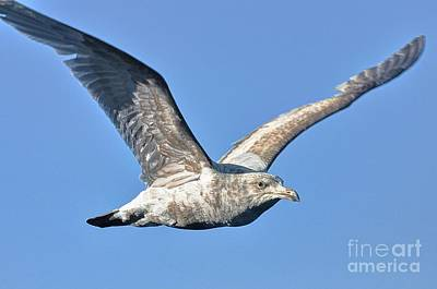 Photograph - Gull Wings by Phillip Garcia