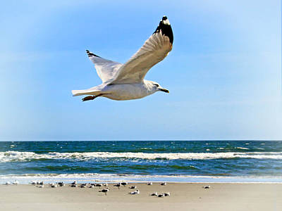 Photograph - Gulls Along The Surf by Carolyn Derstine