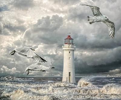 Gulls At Perch Rock Art Print