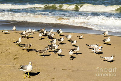 Gulls At The Beach Art Print by Zina Stromberg