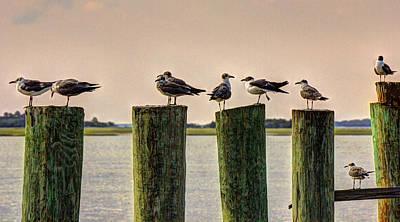 Photograph - Gulls by Barry Jones