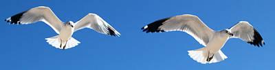 Photograph - Gulls Close Up 3 by Jeff Brunton