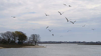 Photograph - Gulls Flying Above The Inlet by MM Anderson