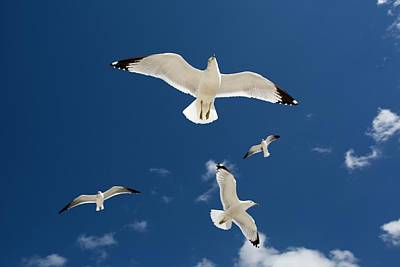 Flying Seagull Photograph - Gulls Flying Against Blue Sky by Jim West