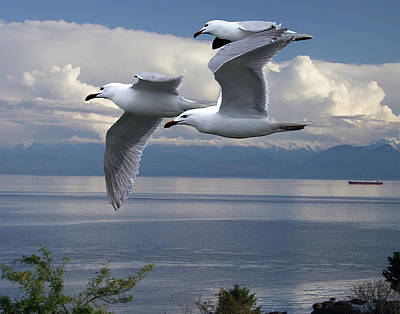 Gulls In Flight Art Print by George Cousins